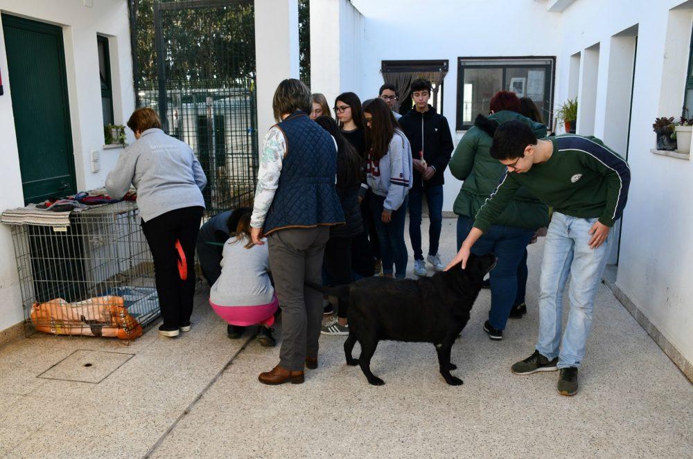 Torres Vedras assinalou Dia Internacional do Voluntariado