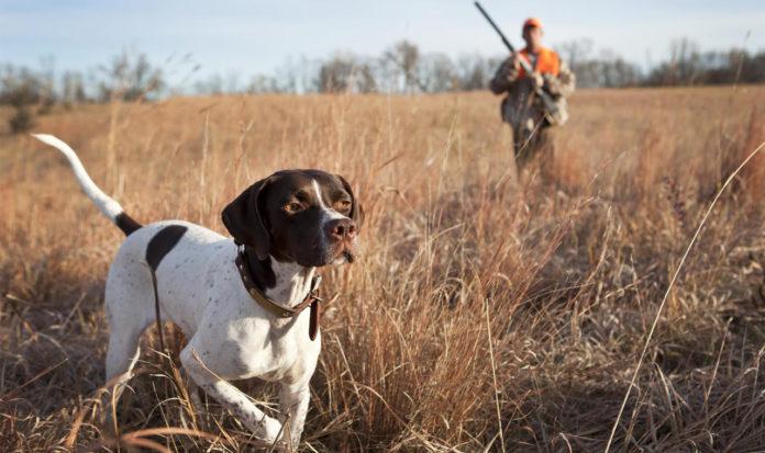 TORRES VEDRAS: GNR detém homem por caça ilegal