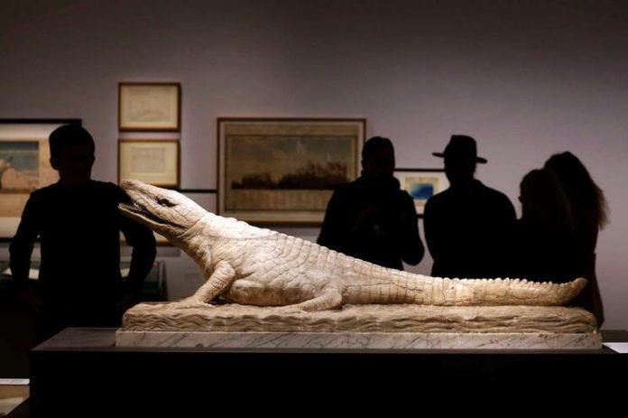 Cinco espécies de antepassados de crocodilos viveram há 150 milhões de anos na Lourinhã