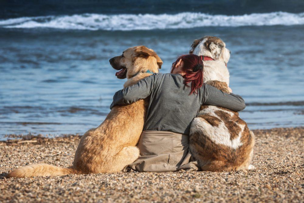 Santa Cruz vai ter uma praia para cães