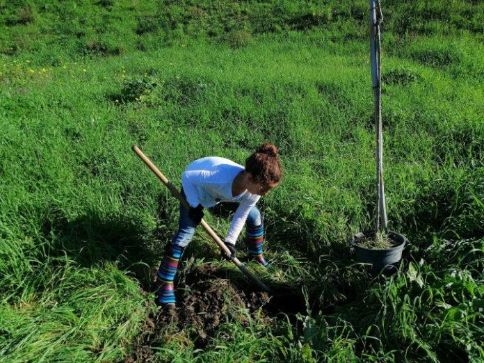 Voluntários dinamizaram limpeza e plantação de espécies autóctones