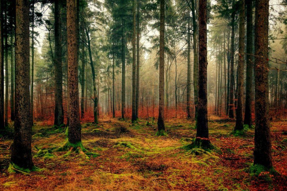 Torres Vedras acolhe ciclo de sessões sobre a importância da floresta
