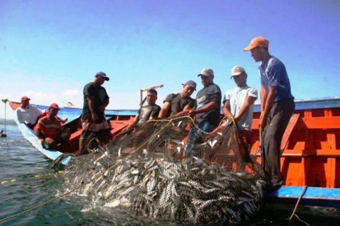 Covid-19: Pescadores da Nazaré pedem fiscalização de preços de venda do pescado