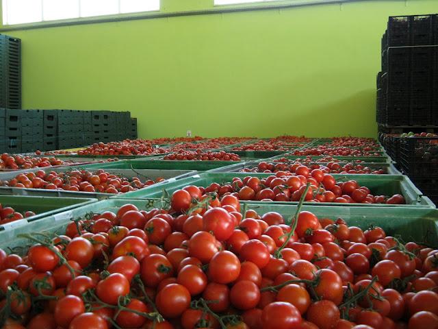 Covid-19: Agricultura reforça segurança alimentar para produzir mas escoa menos