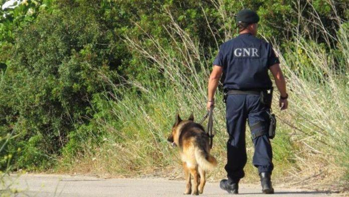 Retomadas buscas para encontrar menina desaparecida no concelho de Peniche