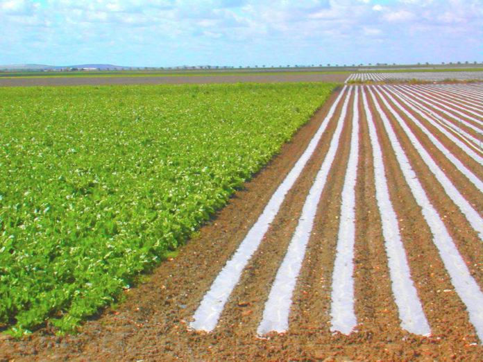 Covid-19: Criada em Óbidos plataforma para escoamento de produção agrícola de todo o país