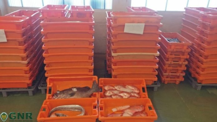 PENICHE: Aprendidos 300 quilogramas de peixe