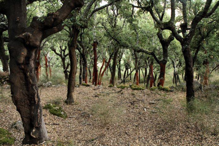 Incêndios: Peniche aprova Plano de Defesa da Floresta após corte nas transferências do Estado