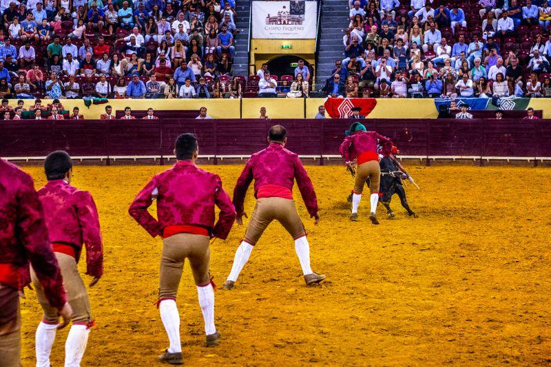 """Covid-19: Forcados convocam protesto por touradas serem """"censuradas"""""""