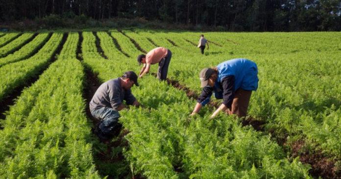 Covid-19: Governo prepara orientações específicas para o setor agrícola