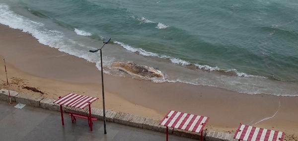 Levantada interdição de banhos na Praia Formosa em Torres Vedras