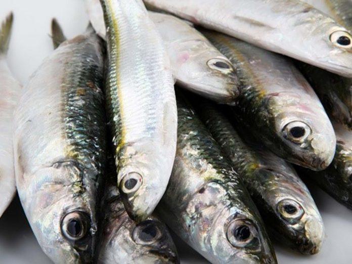 PENICHE: Duas toneladas de sardinha apreendidas por excesso de captura