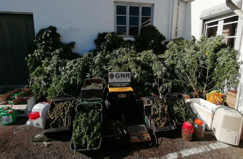 TORRES VEDRAS: GNR detém homem por tráfico de droga